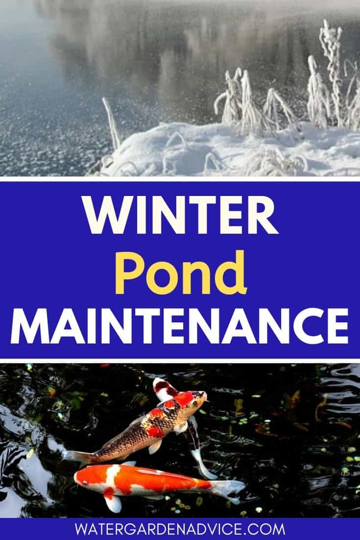 Winter pond maintenance tips
