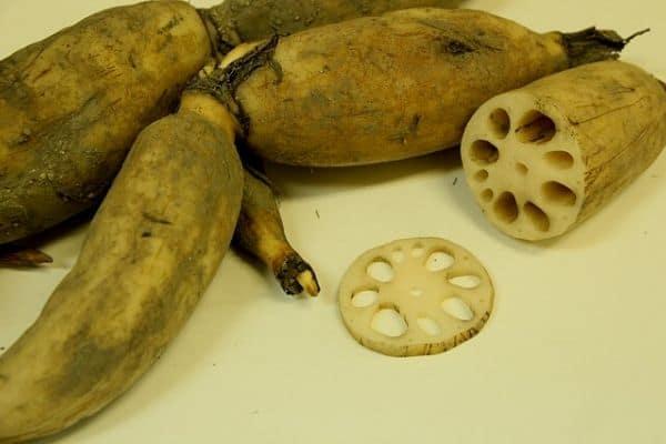 Edible lotus root