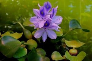 7 Floating Pond Plants