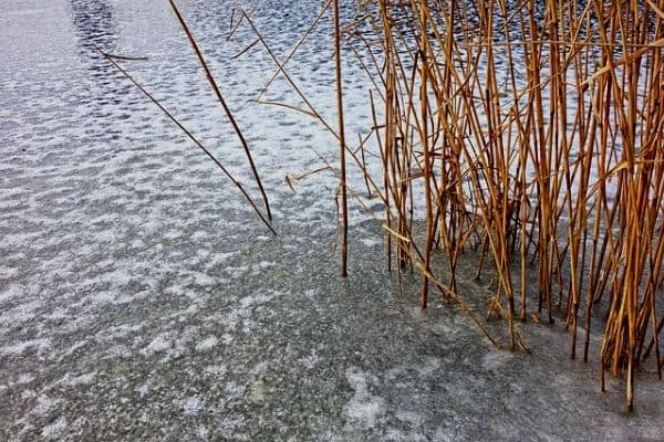Frozen pond water
