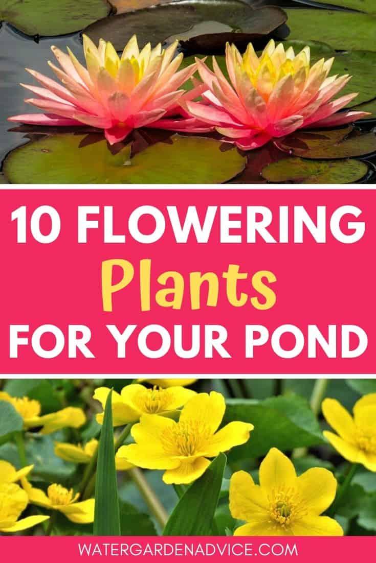 Best flowering plants for ponds
