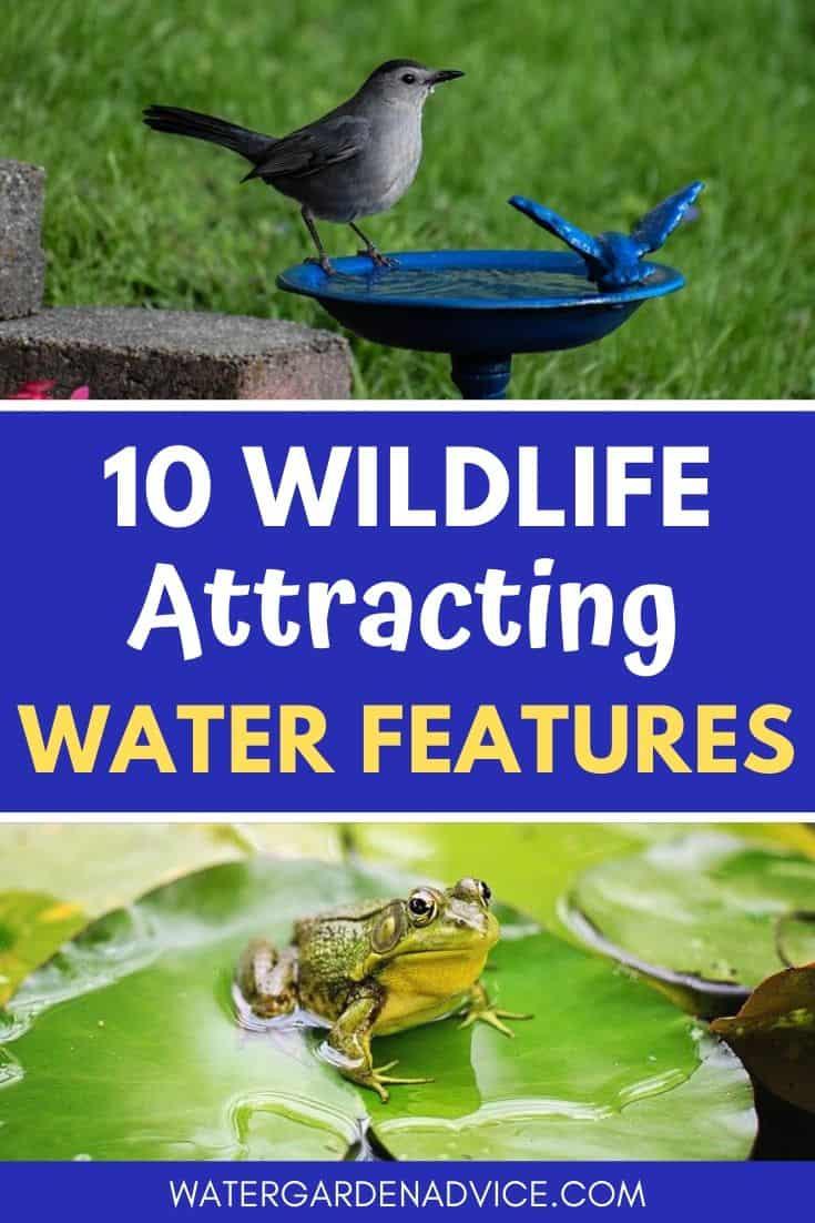 Wildlife attracting water features