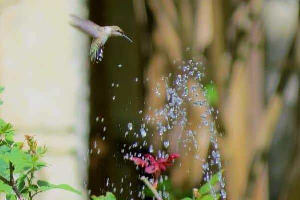 Bird near water feature