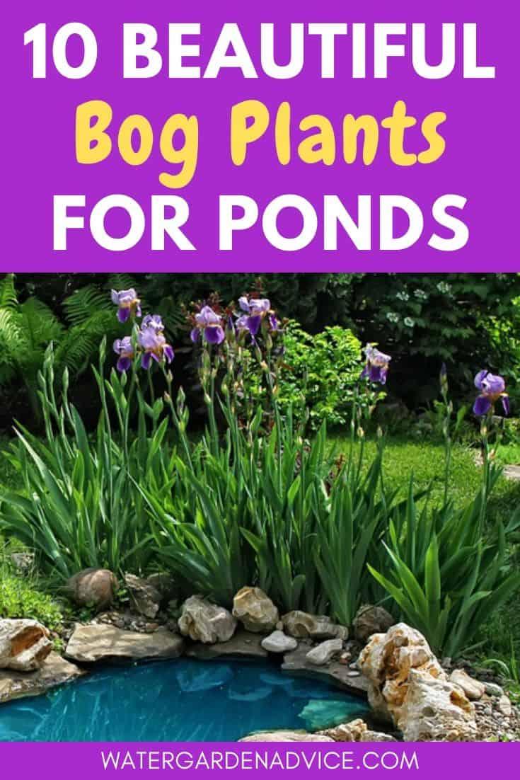 bog plants for ponds