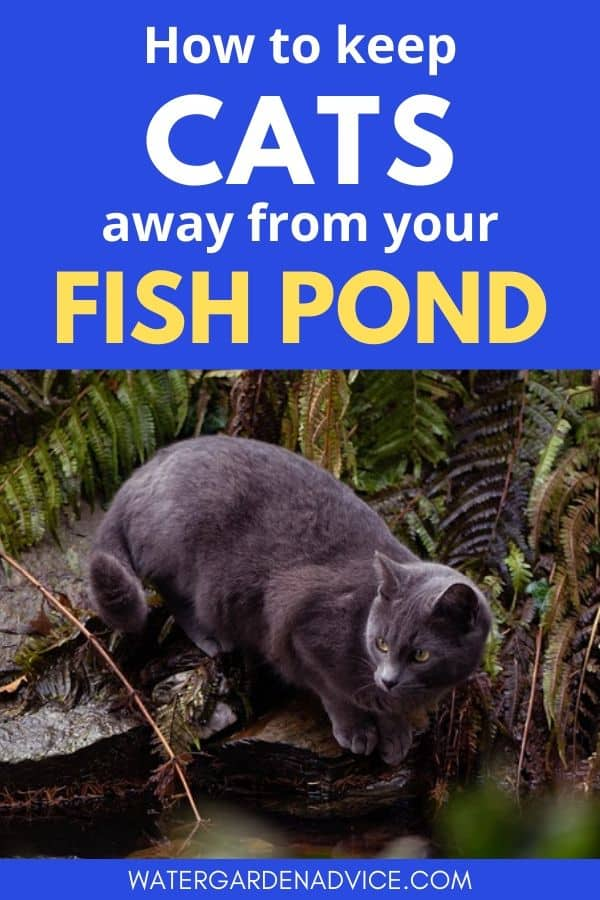keeping cats away from fish ponds