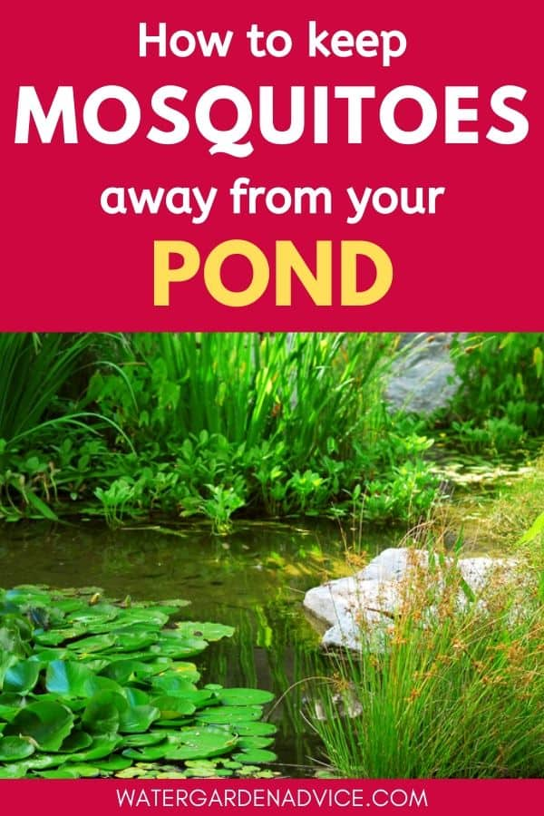 Keep mosquitoes away from ponds
