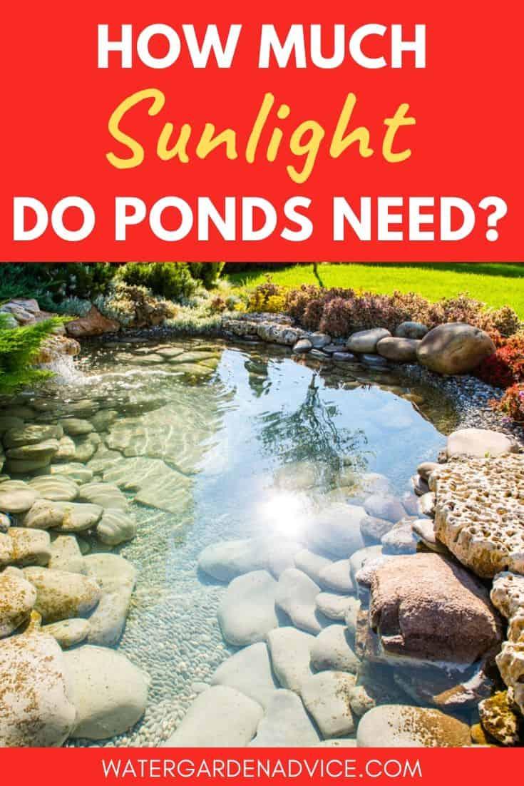 Pond in full sunlight