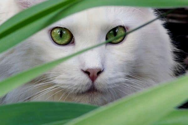 cat near pond