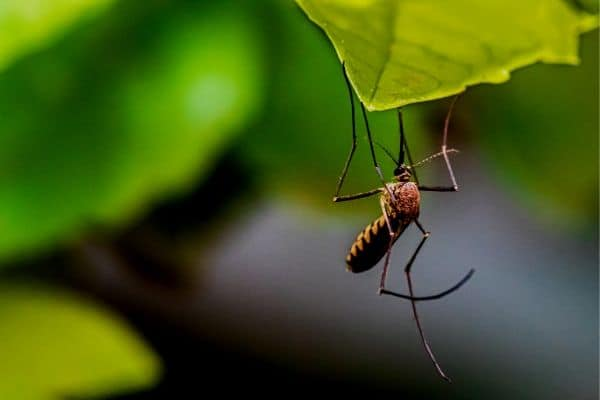 How To Keep Mosquitoes Away From Your Pond