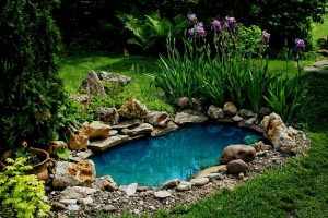 How To Make Your Pond Water Blue
