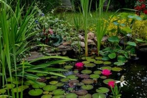 How To Overwinter Pond Plants