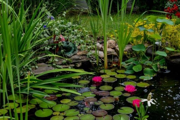 Winterizing aquatic plants