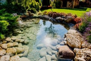How Much Sunlight Do Ponds Need?
