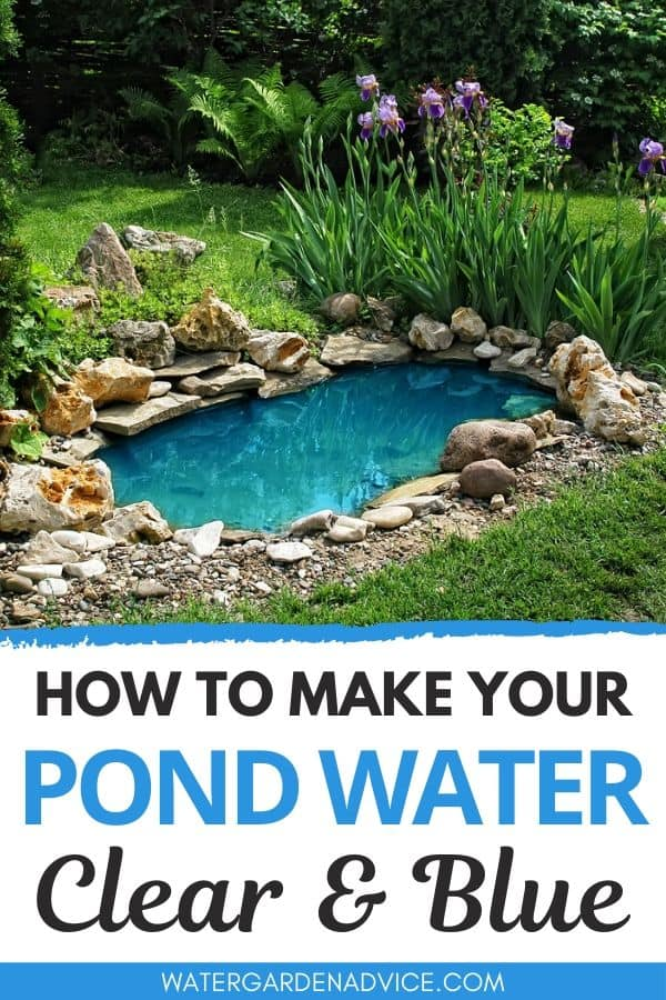 clear blue pond water