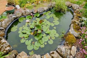 10 Pond Mistakes To Avoid