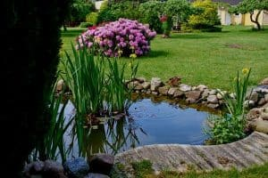 Backyard Pond Depth Guide