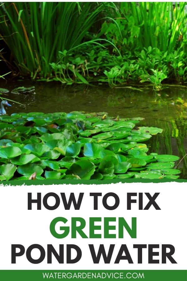 How to fix green pond water