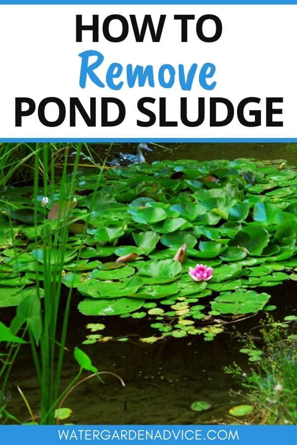 removing pond sludge