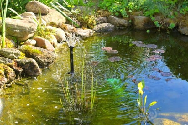 How To Use Hydrogen Peroxide For Pond Algae