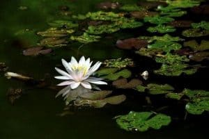 Read more about the article How To Clean A Neglected Pond