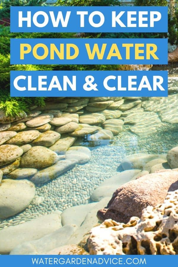 clean and clear pond water