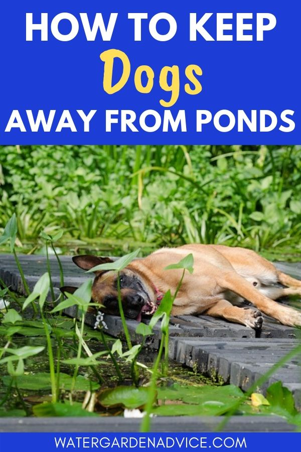 keep dogs away from ponds