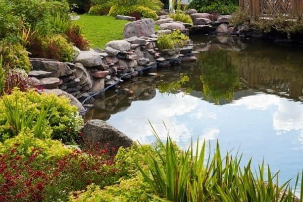 Read more about the article How To Stop Your Pond Overflowing